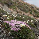 Flowers St.JohnFjorden
